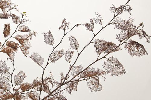 裸になった木の葉