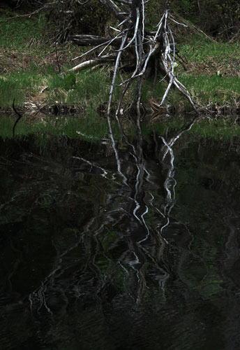 沼の写り込み